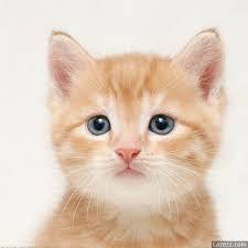 Cute Fluffy Animal