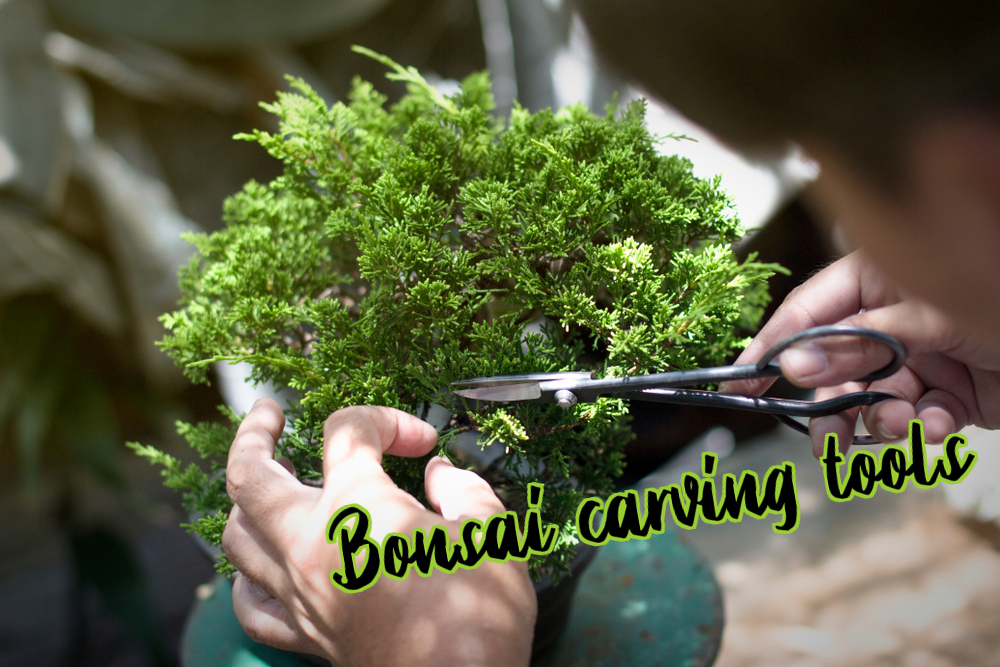 Bonsai carving tools