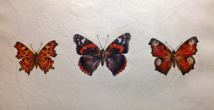 British Butterfly painting