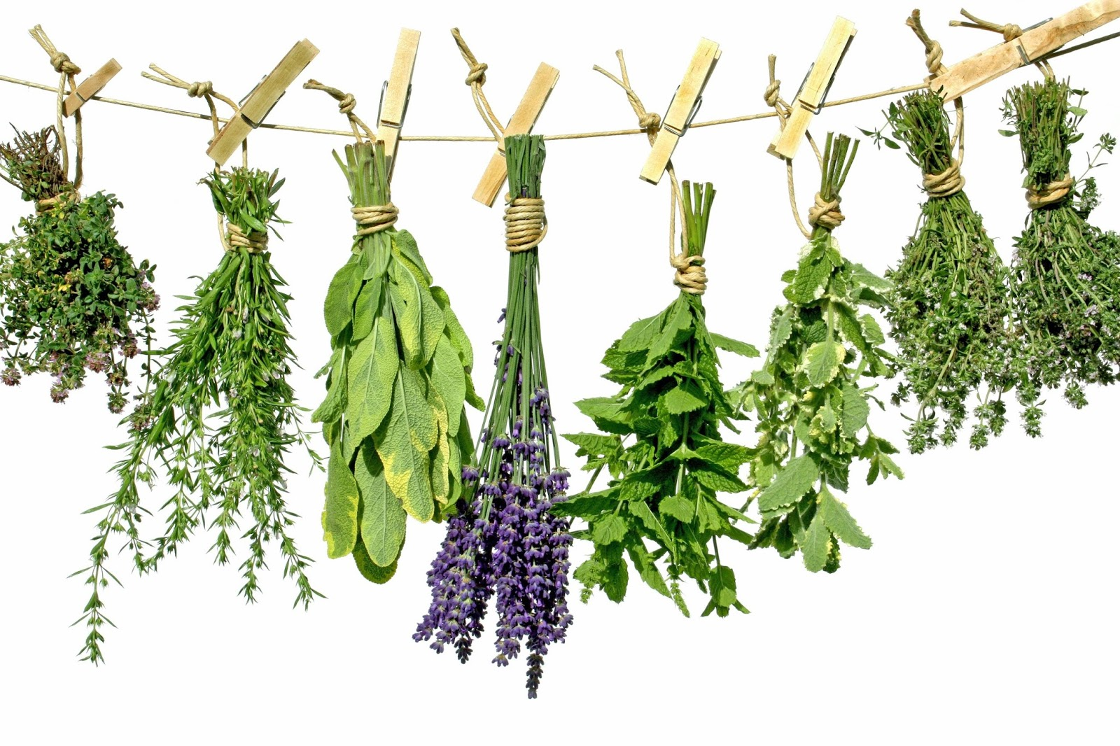 TOP TEN HERBS FOR A HERB GARDEN |The Garden of Eaden
