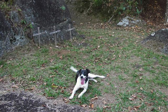 Cemitério dos cachorros, na nossa pousada em São Francisco Xavier