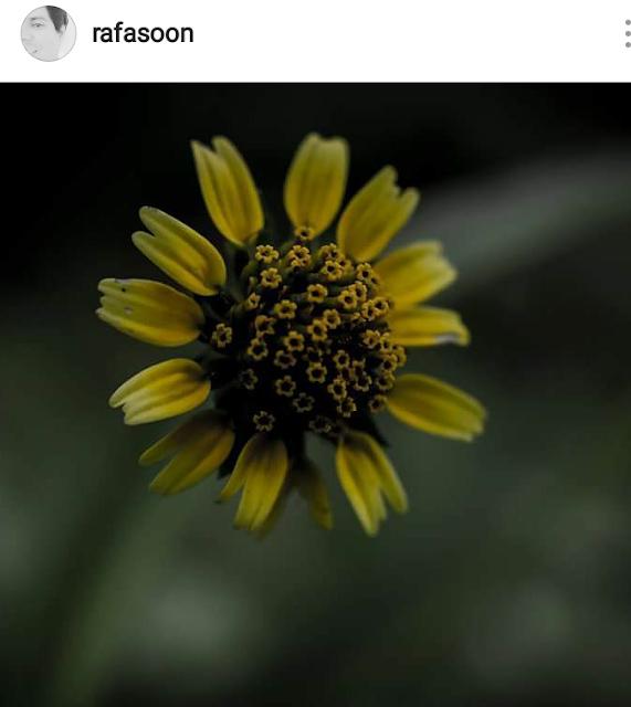 Florecita de Nuestra Tierra