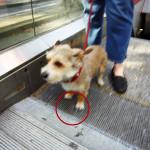 cão na escada rolante
