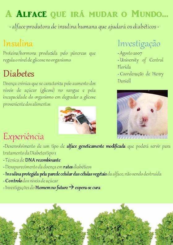 folheto informativo sobre diabetes tipo