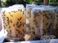 как построить улей,ульи,ульи в банке,как содержать пчел