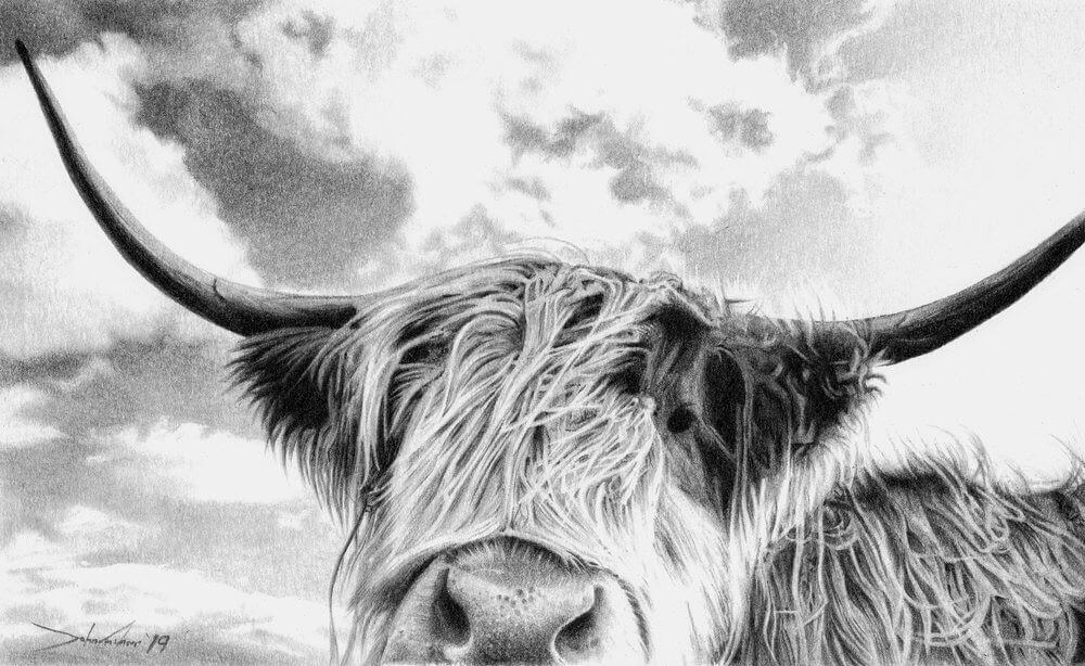 11-Highland-Dogs-Cats-Horses-and-Cows-Pencil-Drawings-www-designstack-co