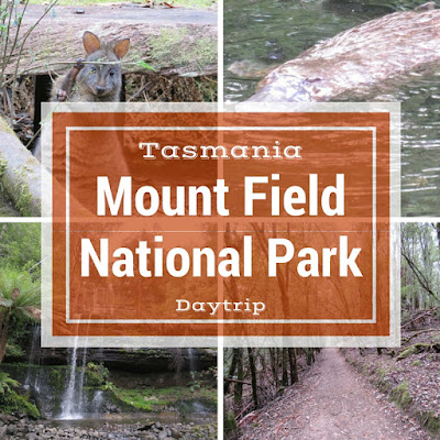 Day Trip to Mount Field National Park Near Hobart Tasmania