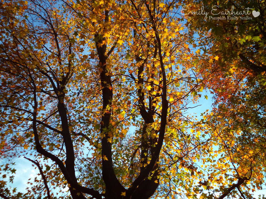 The sun light on orange and yellow leaves on a tree.