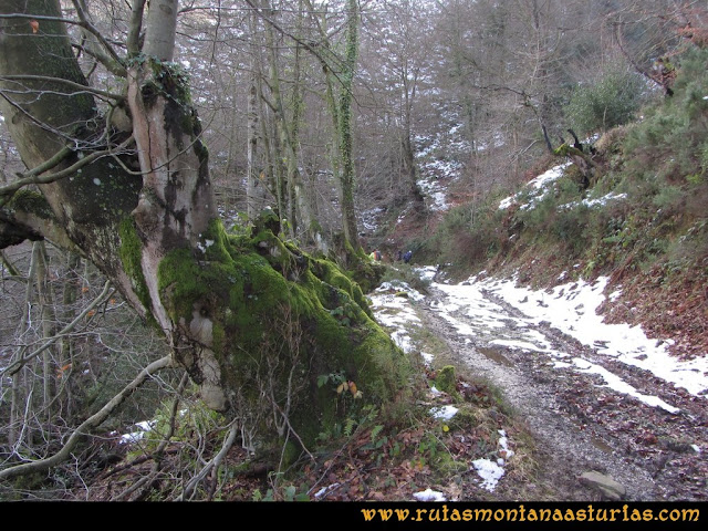 Pico Ranero: Pista entre árboles
