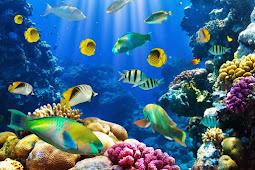 Pengertian, Ciri dan Klasifikasi Pisces (Ikan)