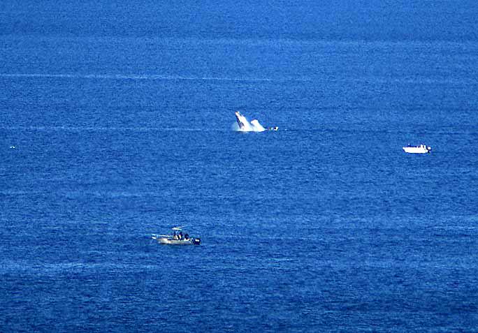 whale watching wollongong - photo#16