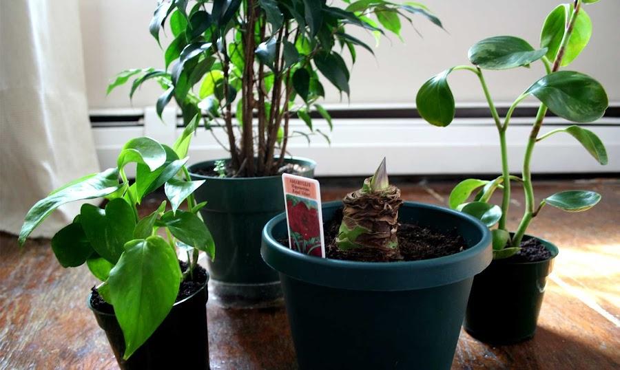 Plantas de interior - Las mejores plantas de interior ...