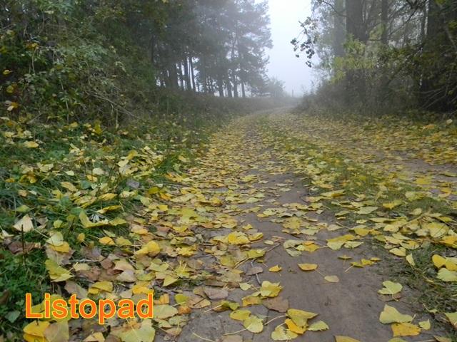 zamglona ścieżka leśna i opadłe liście