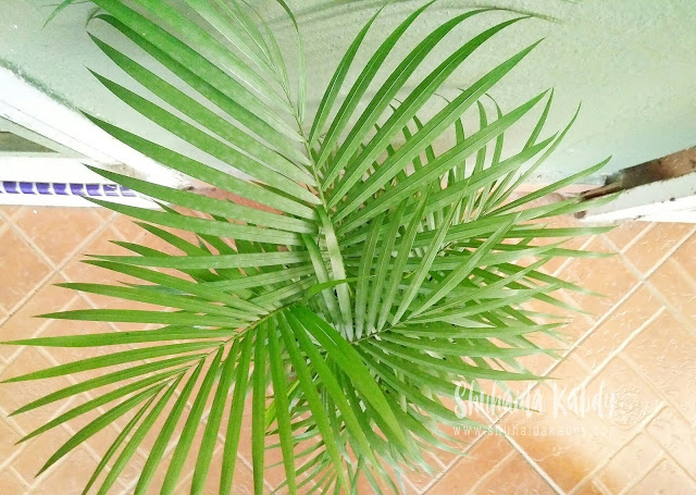 Deko Pokok Bunga Pula
