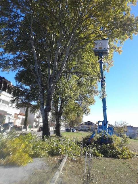 Κλαδεύσεις Δέντρων Με Γνώμονα Την Ασφάλεια Των Πολιτών Στην Καλλιθέα Από Τον Δήμο Κατερίνης - Η Καθημερινή Ενημέρωση Για Την Κατερίνη Και Την Πιερία