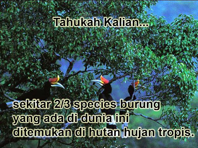 species burung yang ada di dunia ini ditemukan di hutan hujan tropis Sekitar 2/3 species burung yang ada di dunia ini ditemukan di hutan hujan tropis.