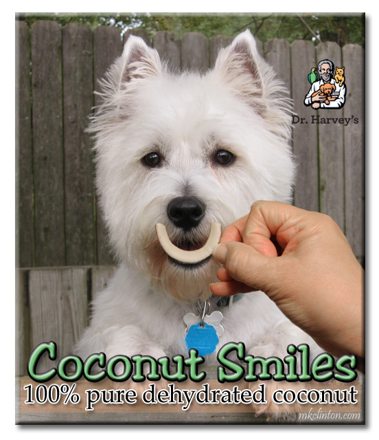 Westie with Dr. Harvey's Coconut Smile in front of his mouth