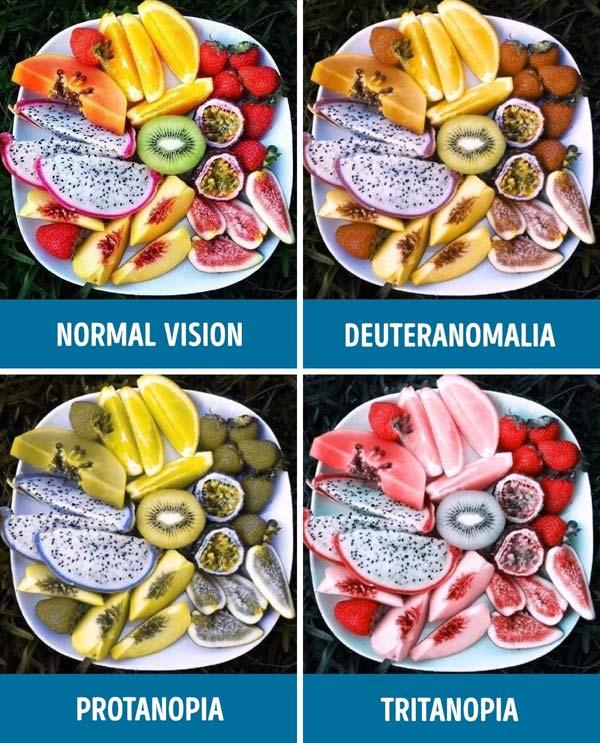 rabun-warna-fruit