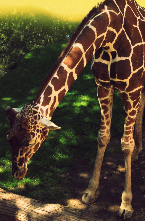 Oregon Zoo: Oregon Zoo In Portland: Part 2