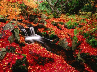 pequeño-riachuelo-atravesando-un-manto-de-flores-rojas