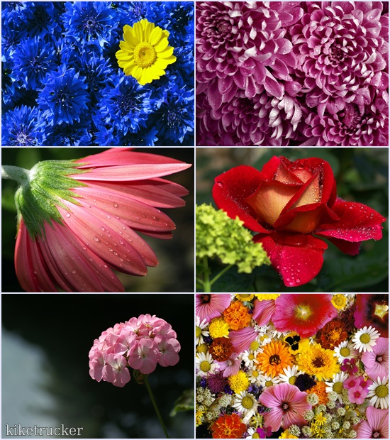 Wallpapers flores multicolor HD - Pack 2