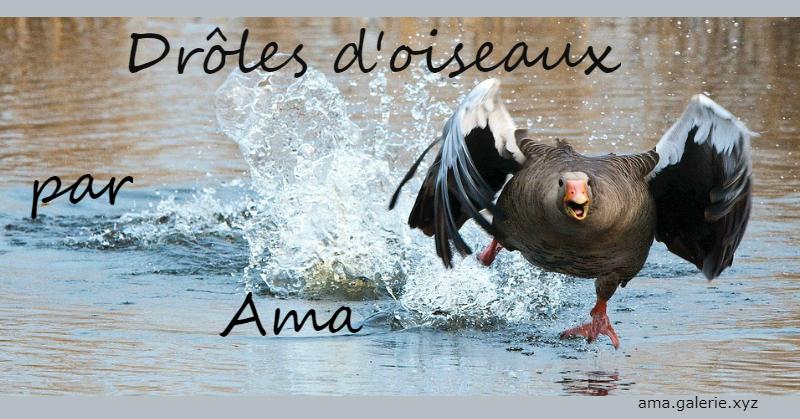 histoires d'oiseaux par Ama sculpteur dans les Alpes de Haute-Provence