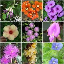 Resultado de imagen de flora de Ecuador