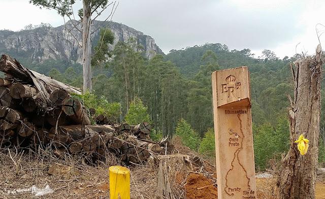 Estrada Real, Floresta de eucaliptos em Barão de cocais, MG