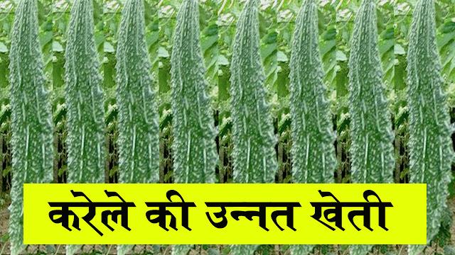Karela ki kheti ki jankari hindi mein