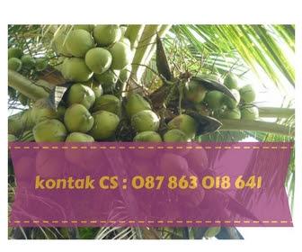 kelapa muda bali