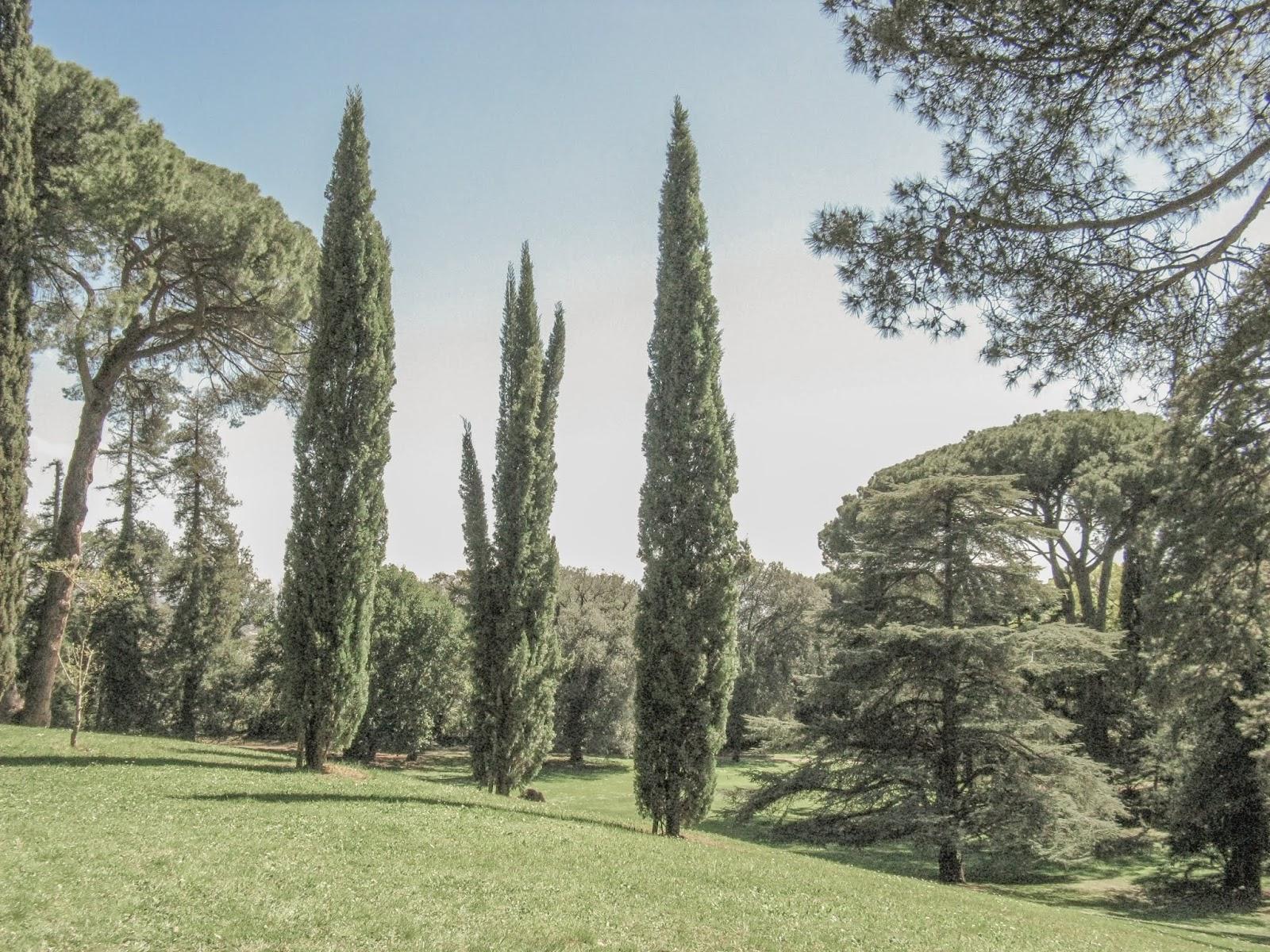 Come Fare Un Giardino Inglese alla scoperta del giardino inglese nella reggia di caserta