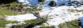 Thelma found a stick