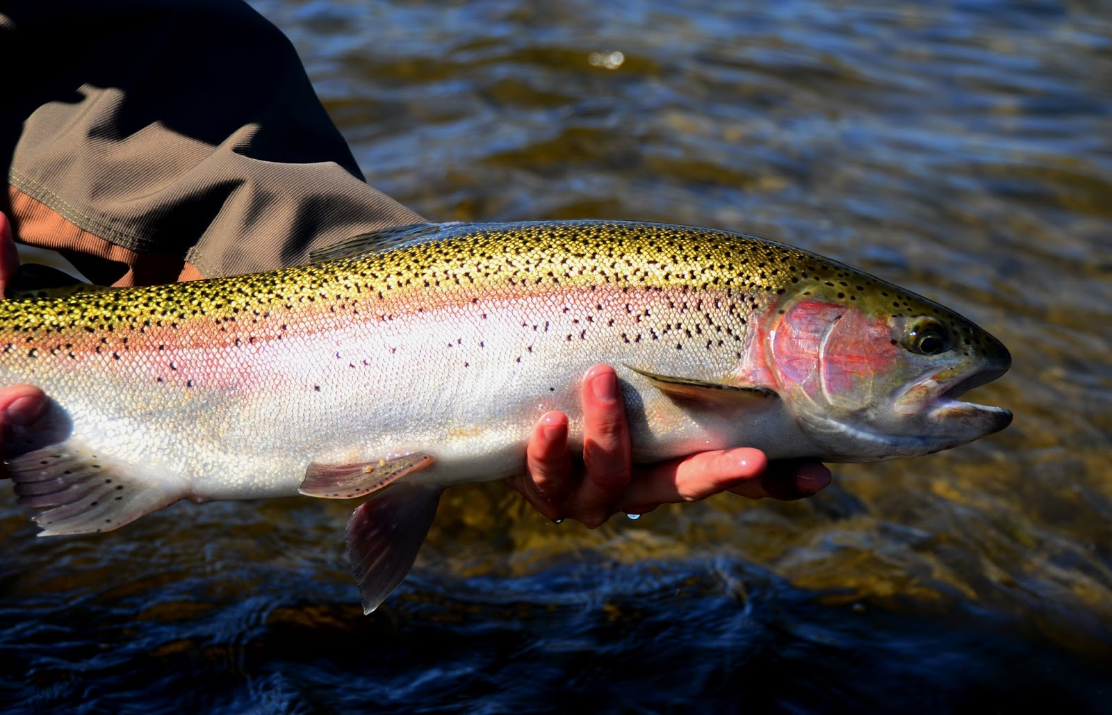 Fly fishing specialties northern california fly fishing for California fishing season 2017