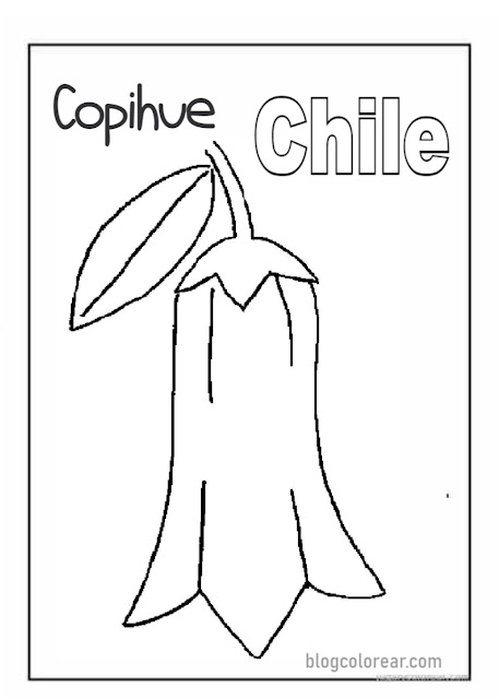 Colorear: dibujo Copihue