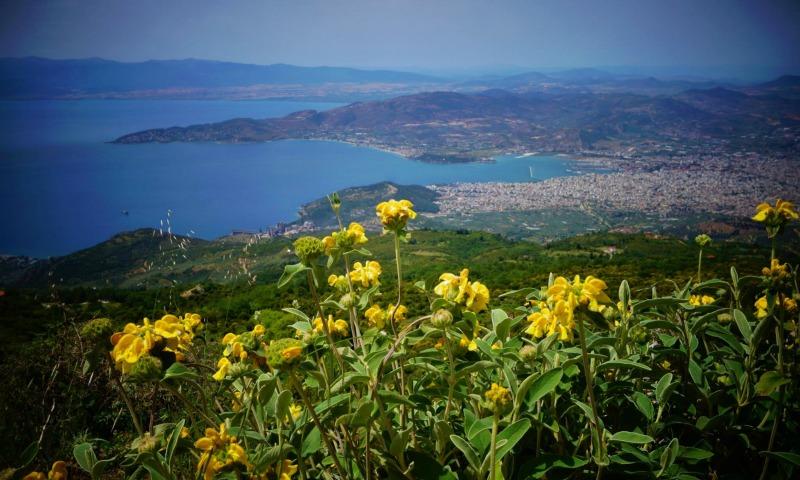 Pradera de Phlomis en Volos Grecia