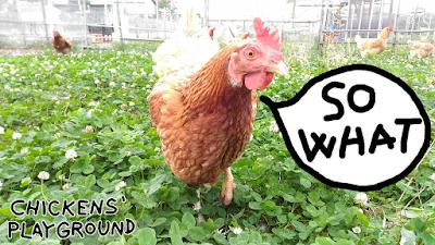 Chicken in clover: So what.