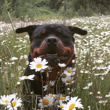 Happy Dogs: Photos
