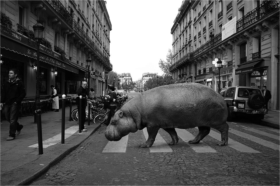 07-Hippo-Hippopotamus-Ceslovas-Cesnakevicius-The-Zoo-on-our-Streets-Black-and-White-Photography-www-designstack-co