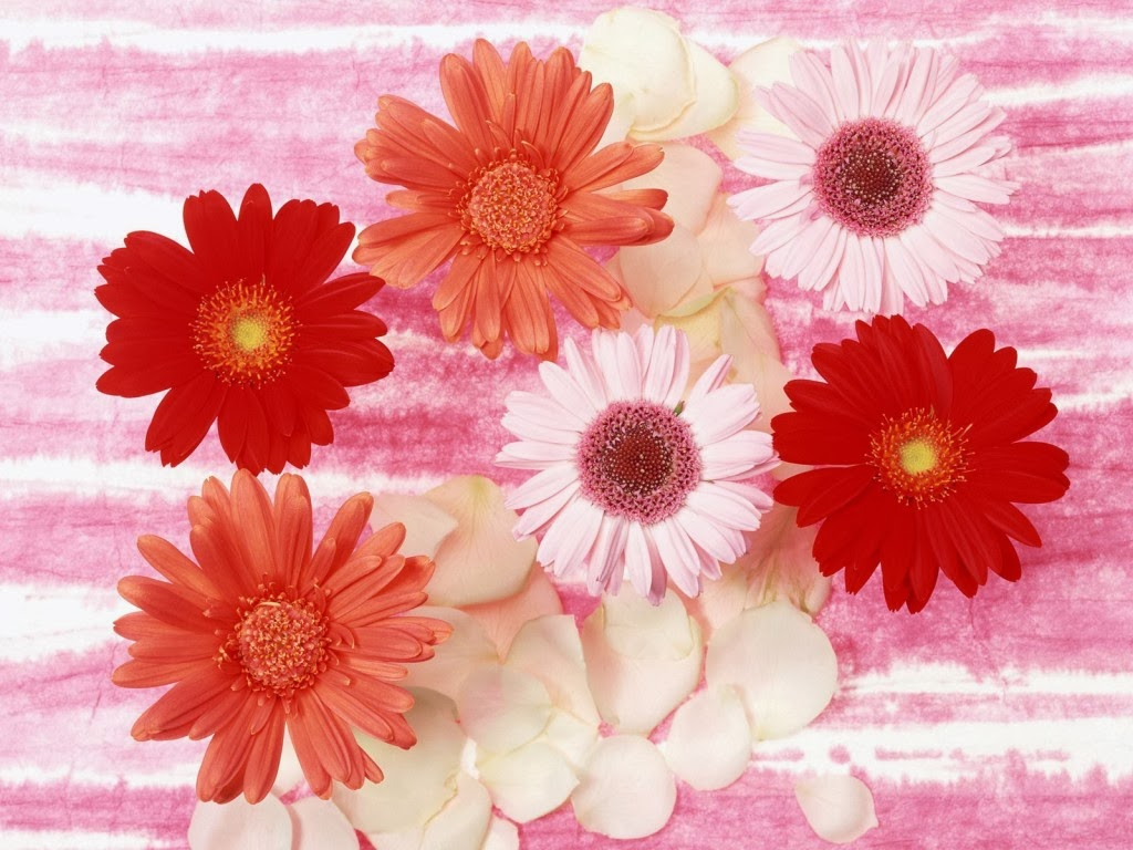 Flowers Wallpapers February 2014