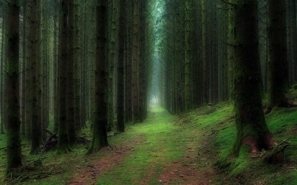 Batang phon berduri Fotografi Foto Landscape dengan Hutan Yang Luar Biasa Cahaya dan Backligth Indah