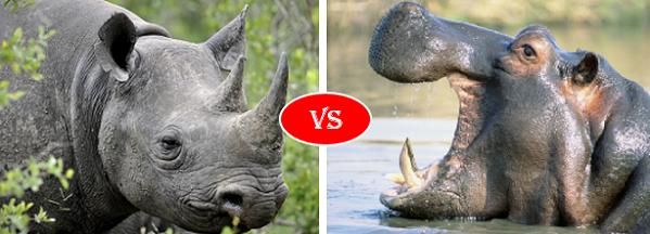 Hippo vs Rhino