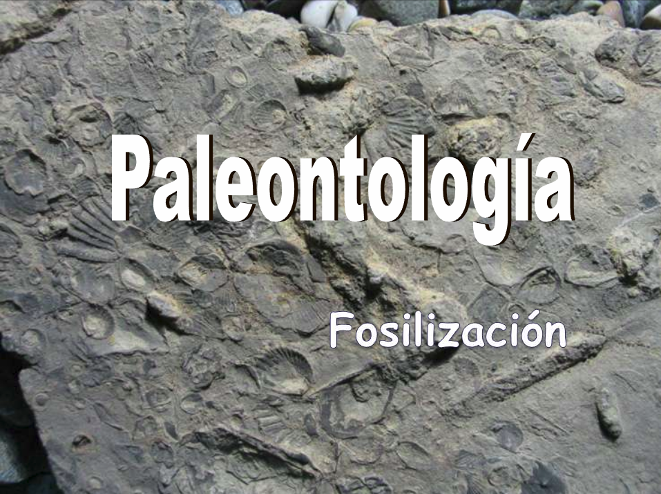 http://iespoetaclaudio.centros.educa.jcyl.es/sitio/upload/fosiles__4eso.pdf