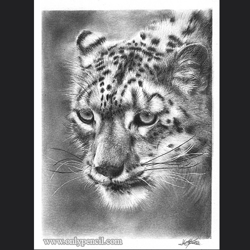 02-Snow-Leopard-Lisandro-Peña-Animal-Drawings-with-Attention-to-Minute-Details-www-designstack-co