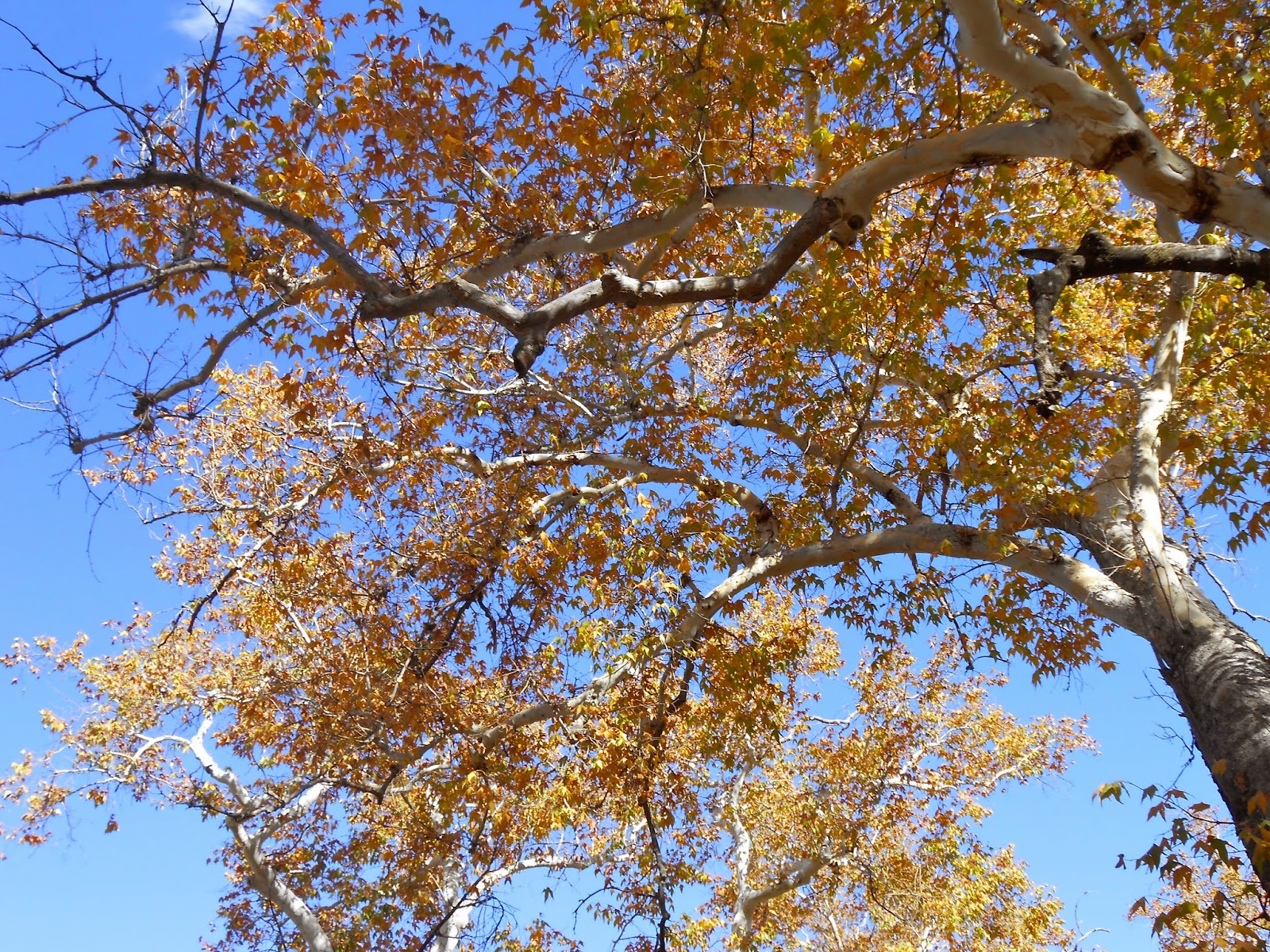 fall in catalina mountains oracle arizona