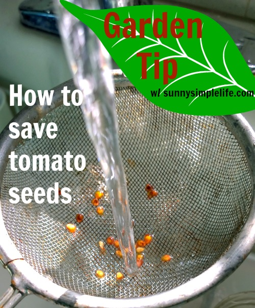 gardening tips, tomatoes, tomato seeds