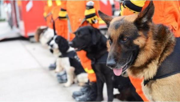 Dog Chow donará 50 mil porciones de alimento para perro