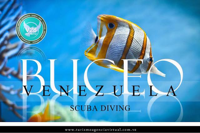 imagen Buceo venezuela scuba diving