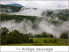 http://www.laurentbessol-photographies.fr/p/ariege-sauvage.html