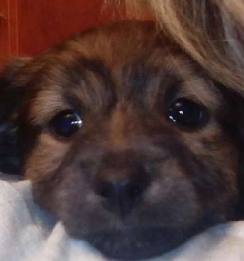 cachorro talla pequena