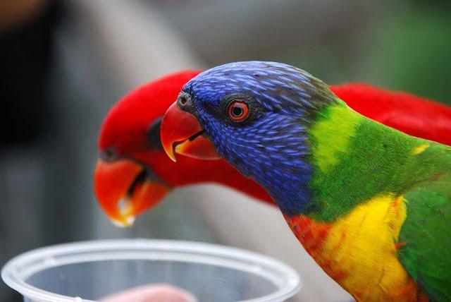 Amazing World & Fun: Beautiful Colorful Birds - Nature - photo#6